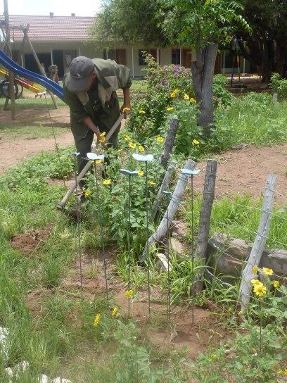 farfalle e fiori in giardino