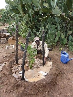 si piantano alberi da frutto
