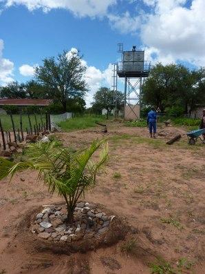 si piantano palme per ombreggiare